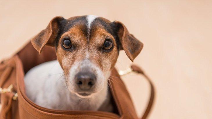 『買う必要がなかった犬用品』3選!実はあまり使わないものとは?