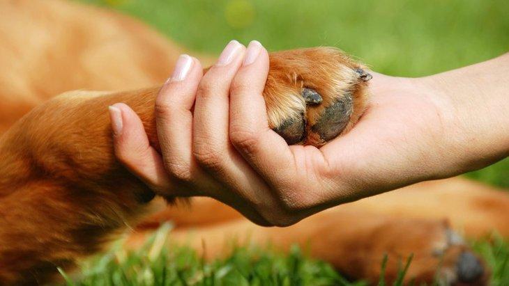 犬の認知と、信頼関係を築くための犬への倫理的な接し方【研究結果】