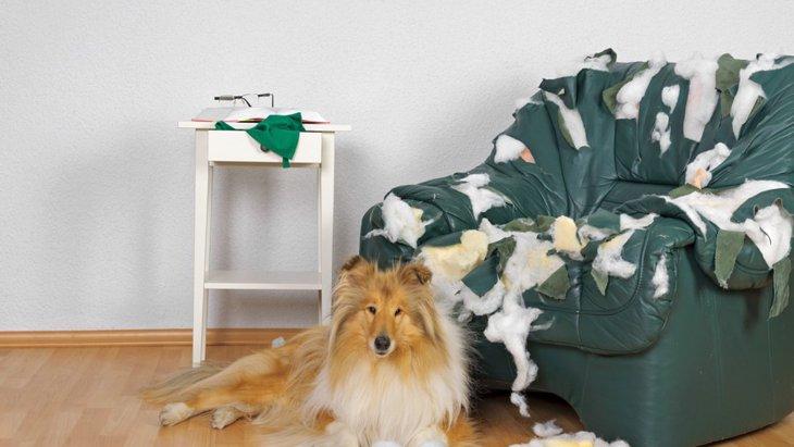 ひとりぼっち嫌いな犬がする4つの行動