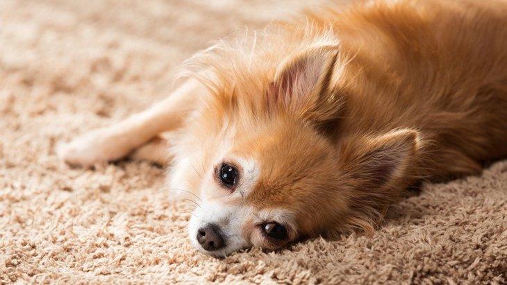 犬が『家の中から出たがらない』時の心理4選!お散歩に行くと時はどう対処すべき?