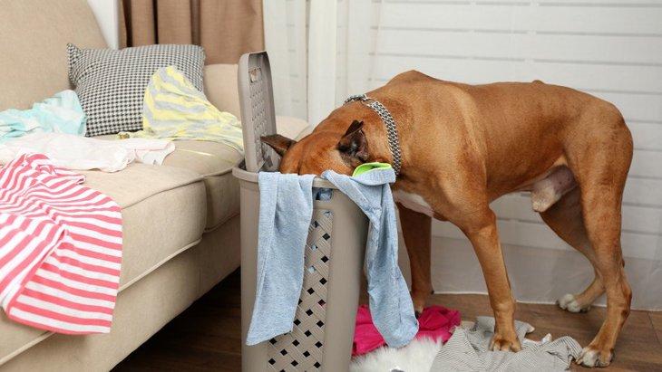 犬の行動に込められた意味とは?しぐさでわかる犬の気持ち