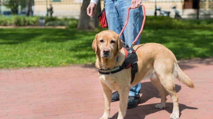 イギリスの盲導犬チャリティ団体がスタートさせた遺伝子研究プロジェクト