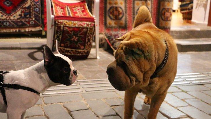 犬同士が目を合わせてる時の心理3つ