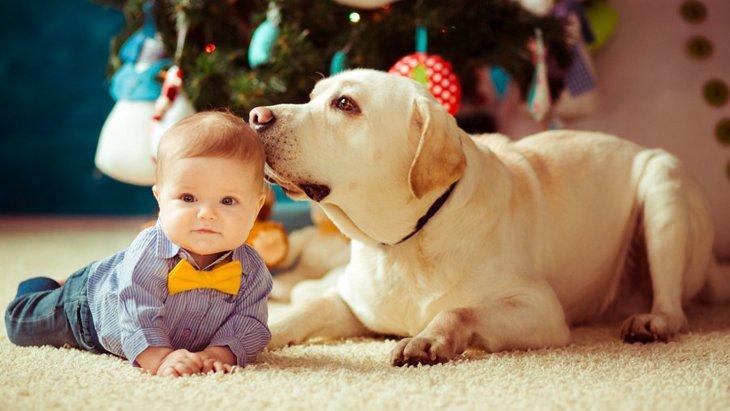 犬が人間の赤ちゃんを守ろうとする4つの理由