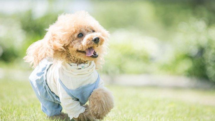 ペットシッターに愛犬のお世話を頼むときに必ず意識すべき6つのこと