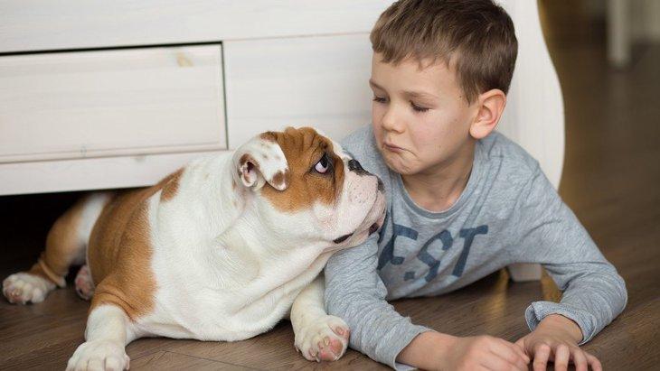 犬は飼い主が落ち込んでるのを理解してる?