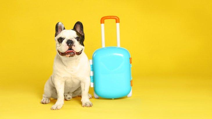 犬にとって『ペットホテル』はストレス?緩和させるためにやれることは?