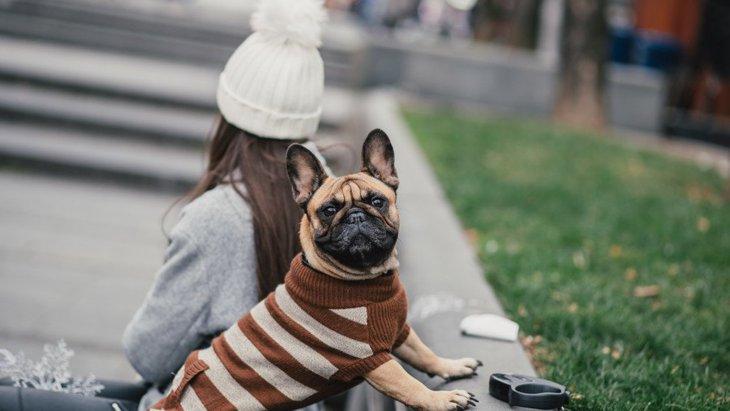 犬の冬服オススメの人気ランキングTOP6!その種類と選び方