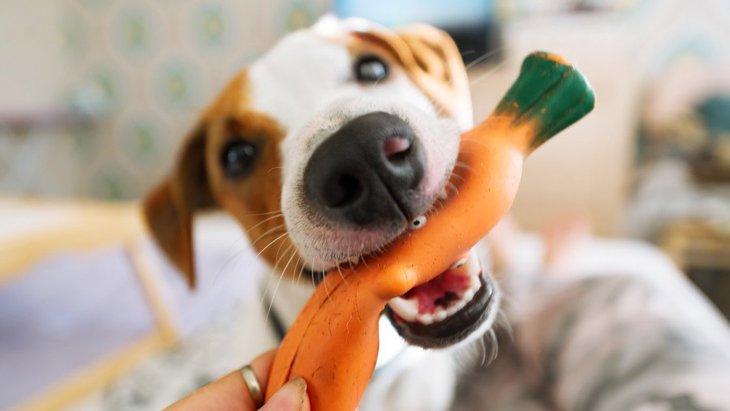 おかえりー!犬が飼い主の帰宅を大歓迎する心理4つ
