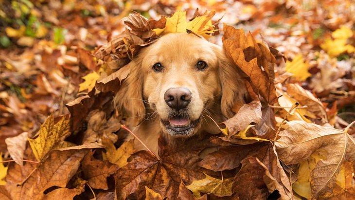 季節ごとに見る犬の食事量と与える際のポイント
