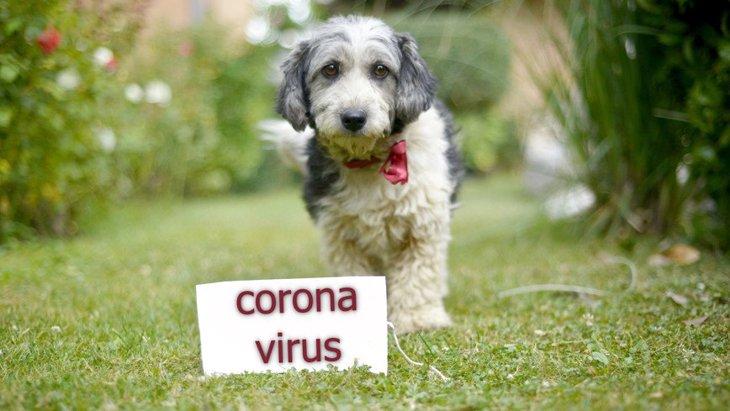 愛犬が新型コロナウイルスに感染しているかどうか、判断する手段はある?