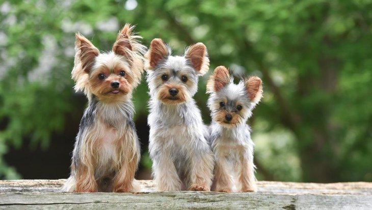 小型犬の飼い主が室内で必ず注意しなければならない4つのこと