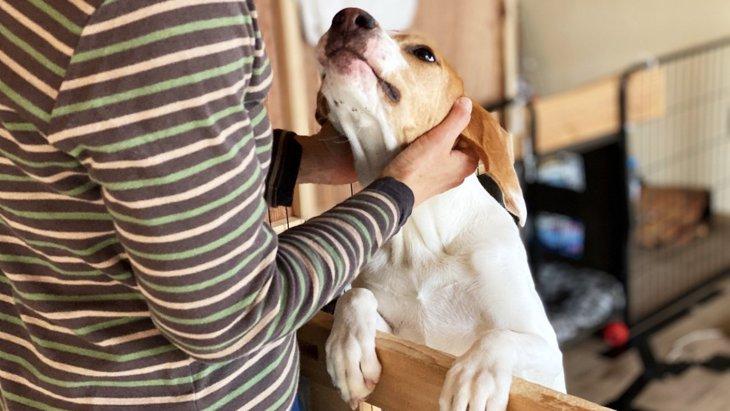 犬が『離れないでほしい』と言っている時の仕草や態度5選