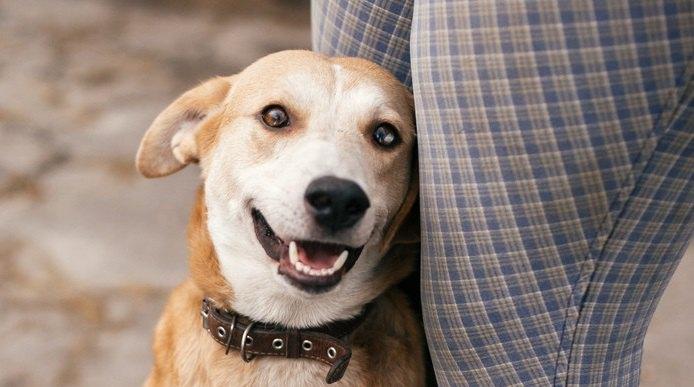 犬からモテまくる人の共通点3選!モテない人との決定的な違いはココだった!