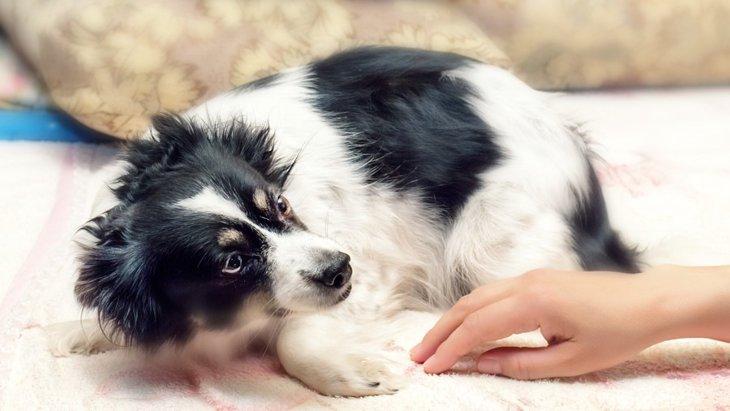 犬を撫でる時に嫌がられる5つの理由