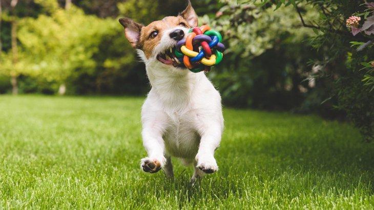 犬がストレスを感じているときとリラックスしているときの行動の違い