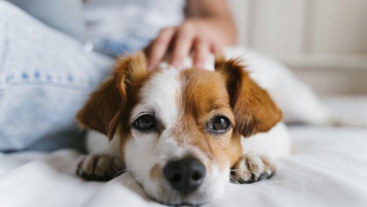 犬を落ち着かせる『撫で方』4つ