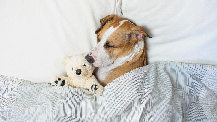 なぜ犬には『お布団好き』が多いの?3つのワケと注意すべきこと