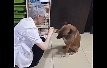 ケガした野良犬が、治療してほしくて自主的に薬局へ