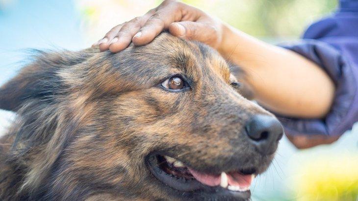 犬が『飼い主を守っている時』にしている行動や仕草4選