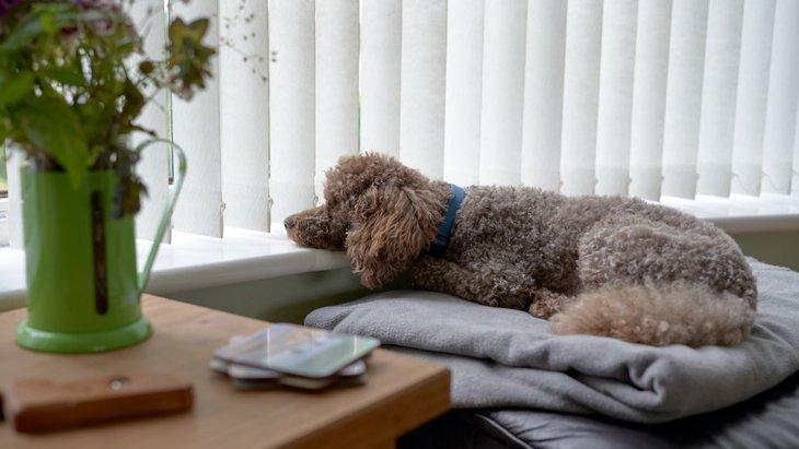 嫌われているわけじゃない?犬が飼い主から『離れて座っている時』の心理5選