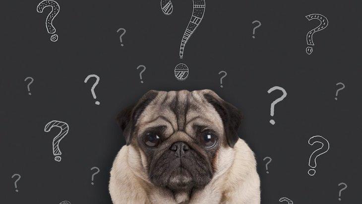 犬が意味を理解できない人間の行動9選!実はその行為、愛犬には通じてないかも?