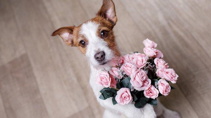 犬が見せる『ありがとうサイン』3選