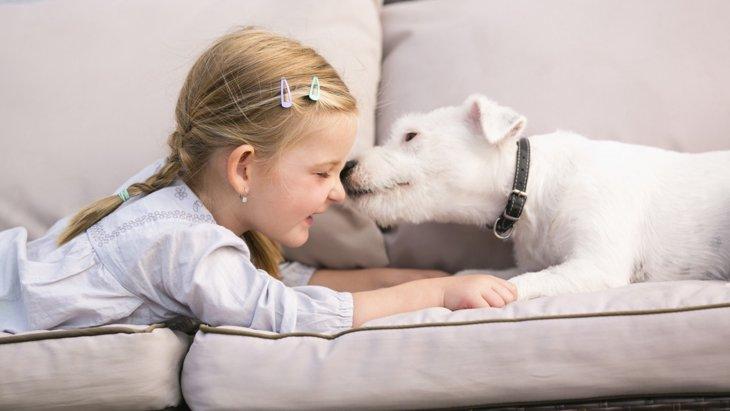 犬が飼い主のニオイを嗅ぎまくる理由
