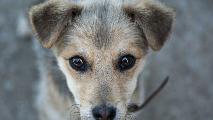犬の里親になりたい!トライアル期間中のチェック項目6つ