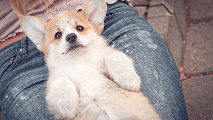 犬が飼い主を喜ばせたい時にする仕草5選