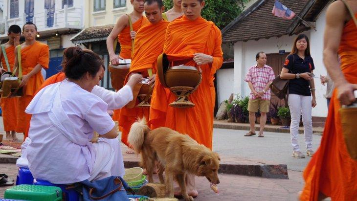 東南アジアの野良犬事情。どこもかしこも野良犬だらけ!