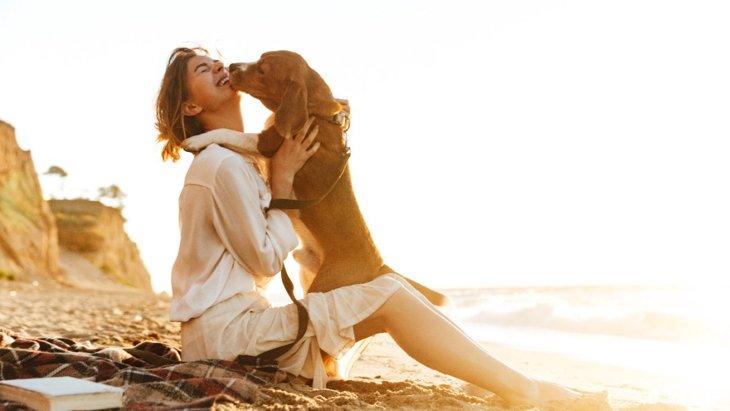 かわいすぎ♡犬が飼い主に会えて大喜びしている時に見せる仕草4選