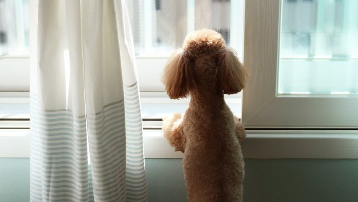 近所迷惑になりそう!愛犬が朝になると吠えてしまう理由4つ