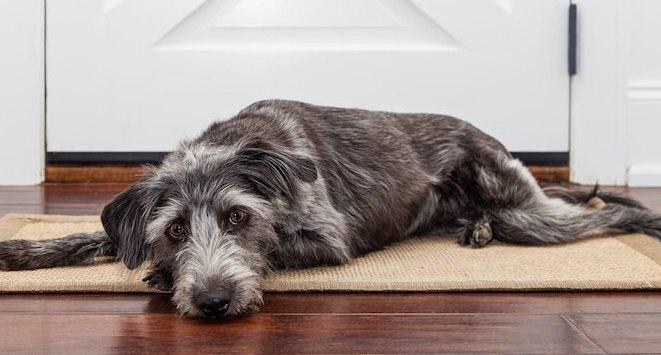 犬が散歩に行きたがらない時の原因3選!どうやって改善させるのがベスト?