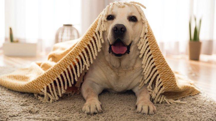 寒い季節の室内犬のお留守番で注意したいこと3つ