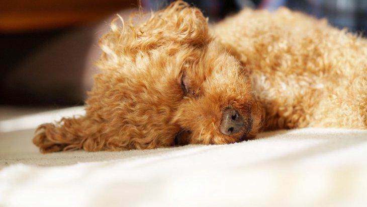 犬の寝相で5つの『性格』がわかる!?