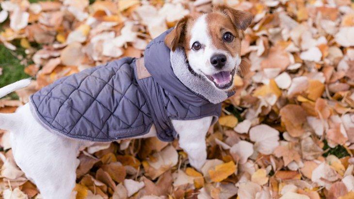 冬は犬に洋服を着せるべき?