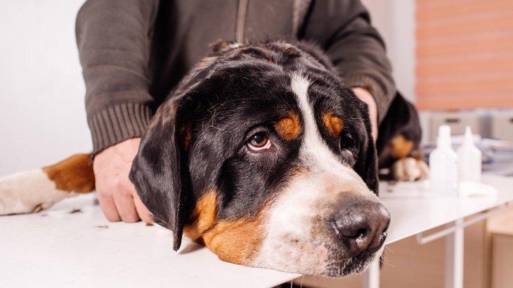 愛犬からの危険信号!今すぐに動物病院へ行く必要がある5つの症状