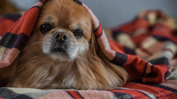 犬のストレスが限界に達している時に見せる症状や仕草7選
