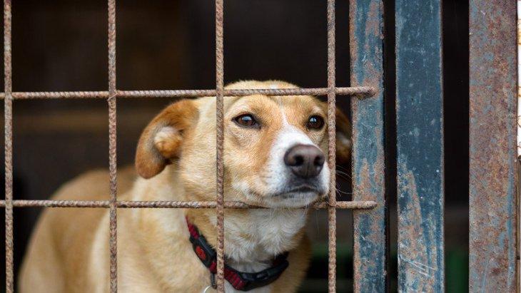 犬に『体罰』を絶対与えてはいけないNGな理由5選