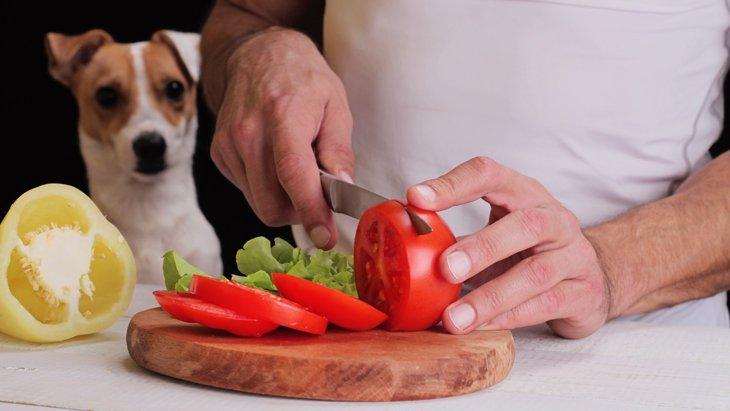 犬の手作りごはんは特別な食事♪でも知識がないといろんな危険につながります。