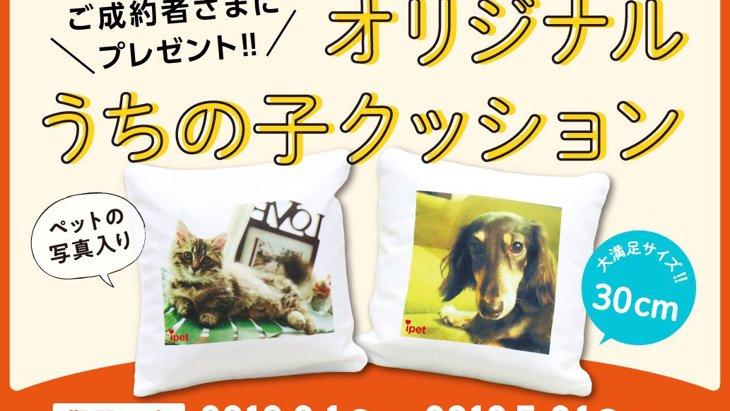 【オリジナルクッションプレゼント】ペット保険ご成約キャンペーン