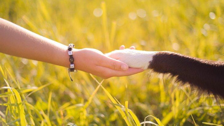 なぜ犬には癒しの効果があるのか?