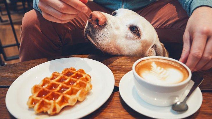吉祥寺のドッグカフェおすすめ15選!ペット可レストランから犬のふれあいカフェまで