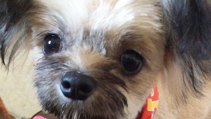 愛犬の寿ちゃんが初めての診察!お腹のキュルルの音の謎