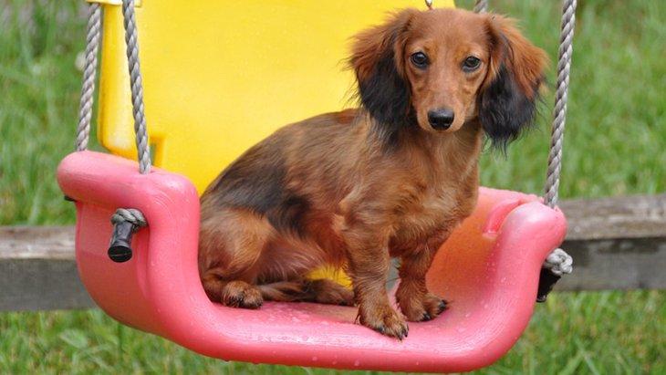 犬との遊びで公園の遊具を使うのはOK?