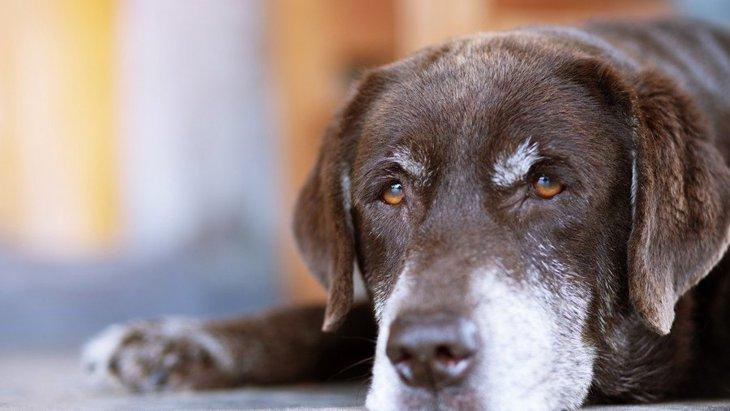 犬が亡くなる直前に見せる行動4選