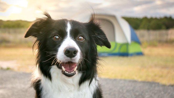 犬に一生を楽しんでもらうための心得5選