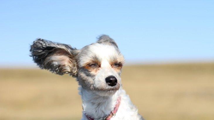 強風の日に犬の散歩をした後は、わんこの目をチェックしよう!