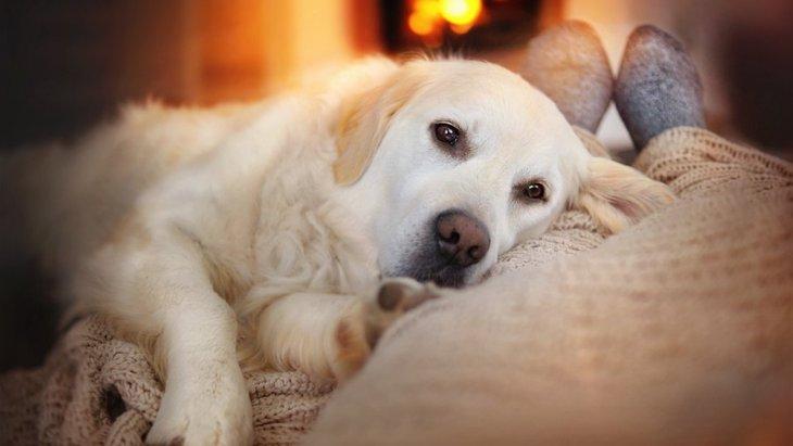 犬が飼い主にもたれかかる心理5つ